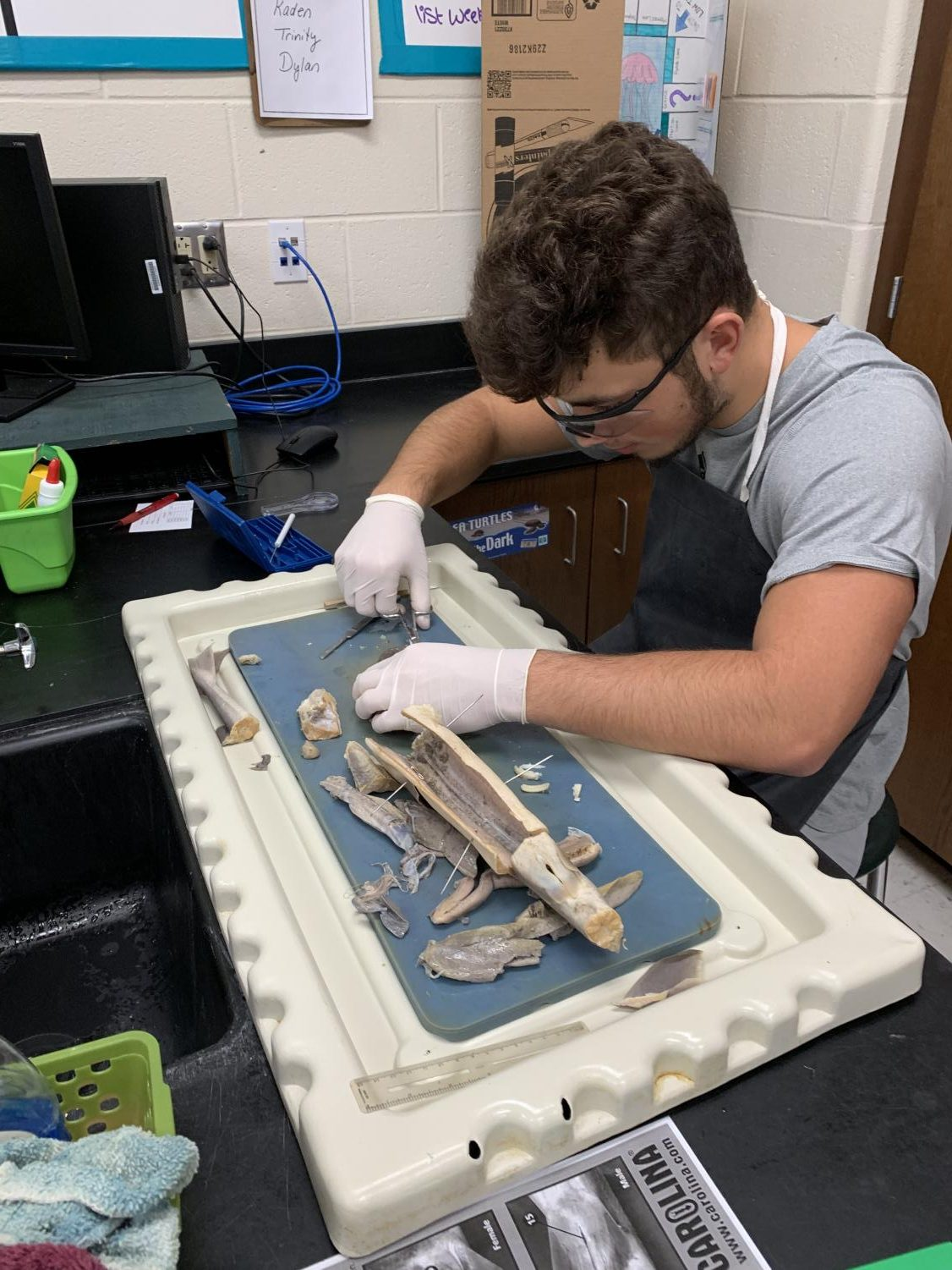 Senior Reid Miller helps his group dissect the shark.