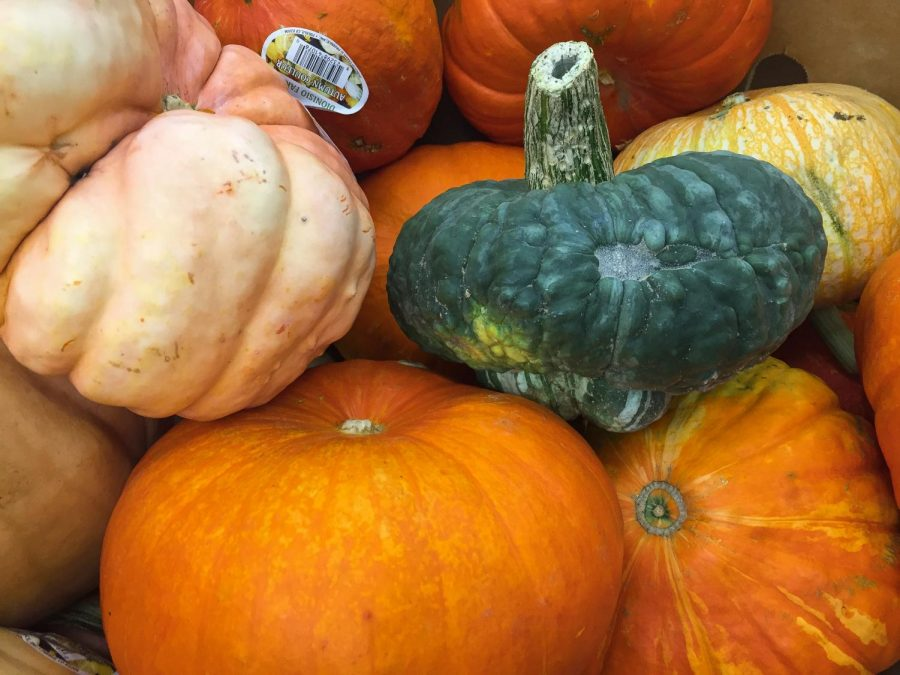 A lovely bunch of pumpkins for the fall season.