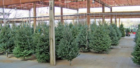 Under the Radar: Live Christmas Trees