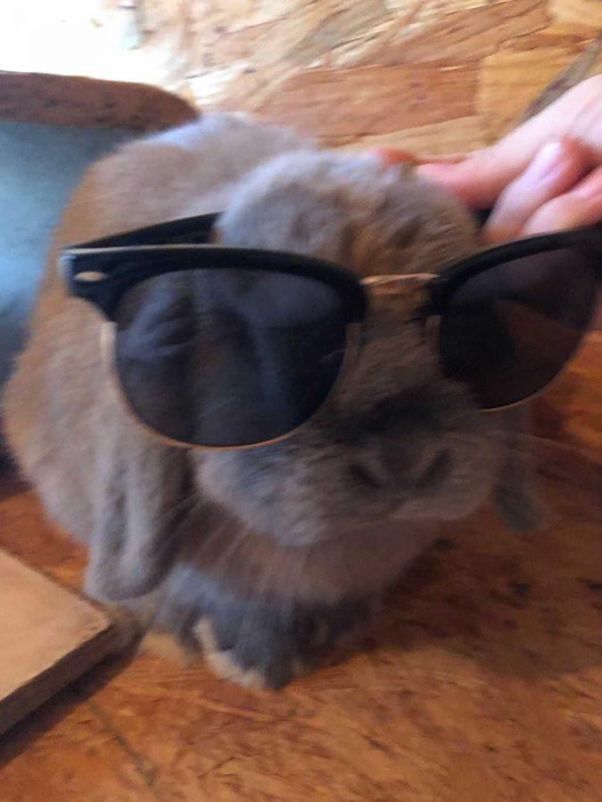 Yoda wearing Lona Ward´s sunglasses again!
