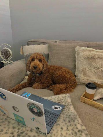 Isleigh Sharpe´s dog, Susu, doing online school!
