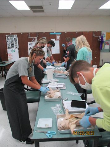 Full Class Completing Autopsy